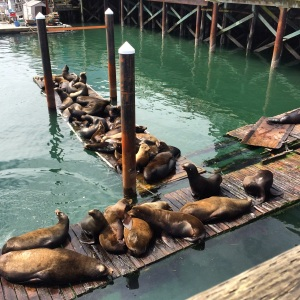 Sea Lions on the Bayfront